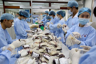 Medical technicians organize and process donated blood at Hanoi Blood Transfusion Center | by World Bank Photo Collection