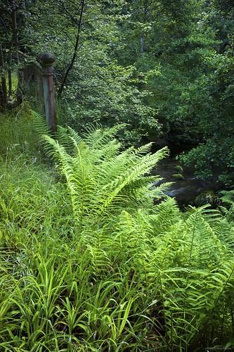 morning fern sunrise scotland stream sony ironbridge watermill grantownonspey nex7 sony0mmf00