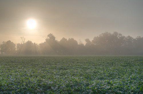 Sun and Beans | by Vincent1825