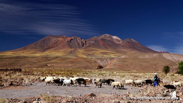 Altiplano - Atacama desert, Chile