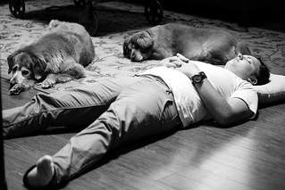 205/365 Snoozing with dogs | by Kelly__Webb