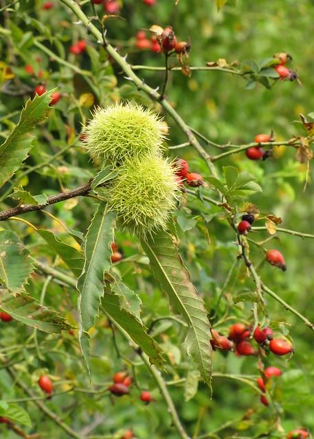 az ősz gyümölcsei / fruits of Autumn