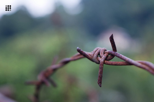 Barbed   by MaxIFaleel
