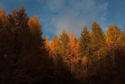 cabrach glenfiddich moray scotland alba autumn colours forest sunset trees dufftown unitedkingdom