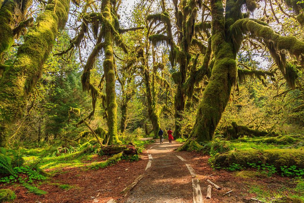 Grove of Maples