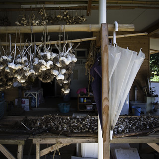 Drying Garlic on the ARI Teaching Farm | by jacob schere [in the 03 strategically planning]