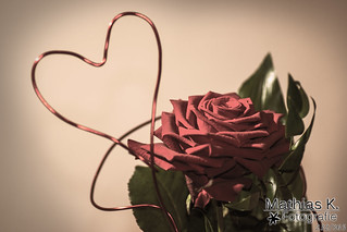Liebe | Projekt 365 | Tag 232