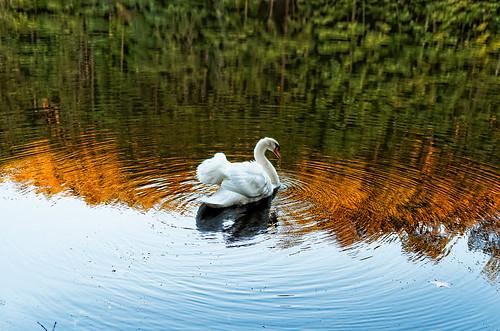lake color landscape swan pentax 18 limited k5 fa31mm