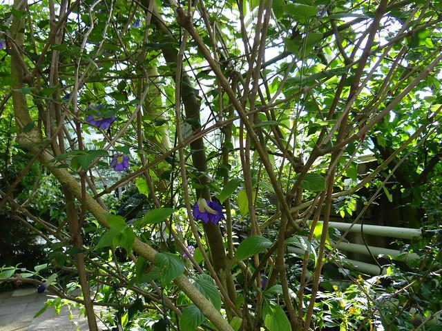 Botanischer-Garten-00761