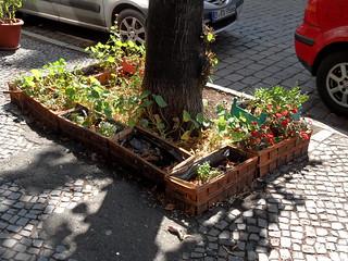 Urban Gardening   by onnola