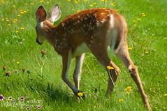Oh Deer-7024