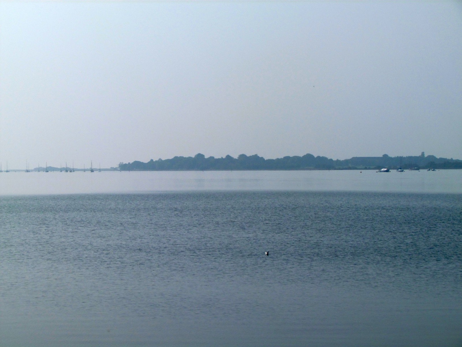 photo from walk Thorney Channel