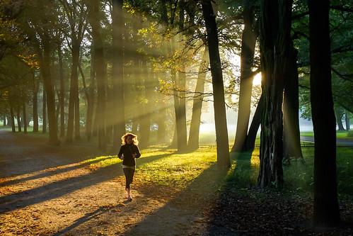 park sunrise germany laub herbst brunswick gras jogging sonne wald sonnenaufgang morgen sonnenstrahlen jogger braunschweig weg laufen gegenlicht morgensonne lowersaxony morgennebel spätsommer prinzenpark godray