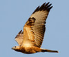 Long-Legged Buzzard by Cyprus Bird Watching Tours - BIRD is the WORD