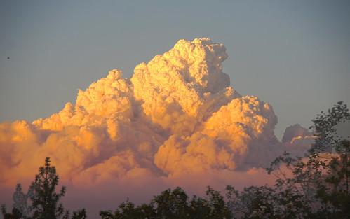 cloud northerncalifornia fire foliage placerville wildfire eldoradocounty pyrocumulus kingfire