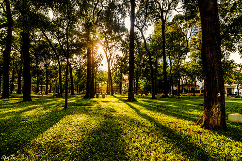 park travel trees light sunset shadow sun sunlight reflection tree green grass landscape asia southeastasia peace afternoon sundown wide peaceful sunny tokina vietnam reflect saigon sunray eastasia wideanglelens landscapephotography widelens tokina1116 easasia canon600d canonkissx5