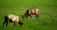 North American Wildlife 60