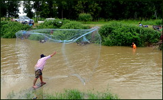 Net fishing...   Kalasin,  Thailand
