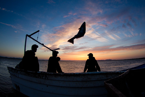 Catch share | by Oregon State University