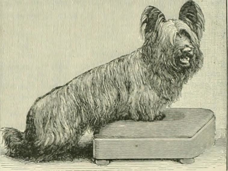 Skye terrier - Dog Scanner