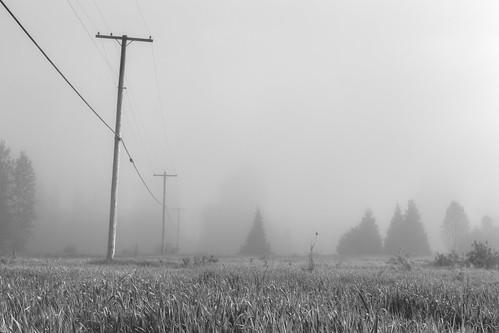 blackandwhite landscape nature telephonepole foggy fog pacificnorthwest canoneos5dmarkiii canonef2470mmf28lusm washington johnwestrock