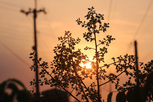 road sunset orange leaves silhouette yellow backlight view country 夕陽 backlighting 剪影 goodevening 晚安