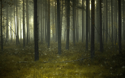 Silent Forest | by Jyrki Salmi