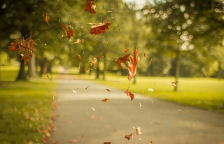 Leaves | by augustinecollective
