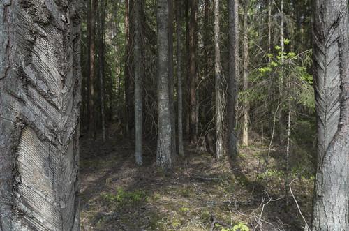 latvia valkamunicipality ērģemeparish valkasnovads ērģemespagasts panoramio