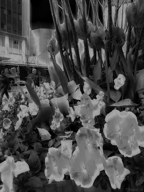 Urban Flowers: Dark Light