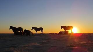 Assateague August 2014: Sunrise Horses | by Mrs. Gemstone