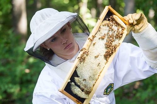 Student examines bee hive