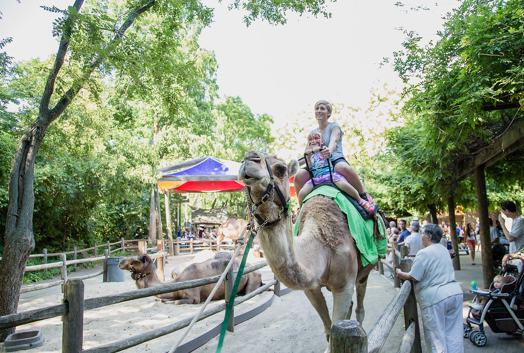 Camel Ride At The Bronx Zoo Jordanesque23 Flickr