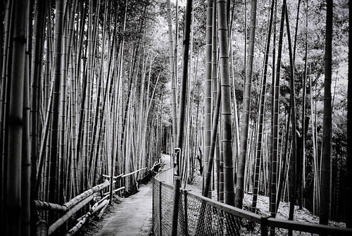 Dusk on the Bamboo Path Above Fushimi Inari Taisha, Kyoto | by jacob schere [in the 03 strategically planning]