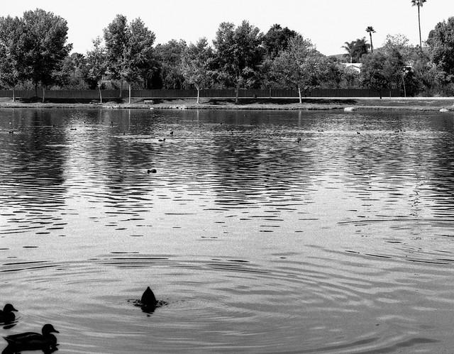 Lago (2) (PruebaMamiya005)