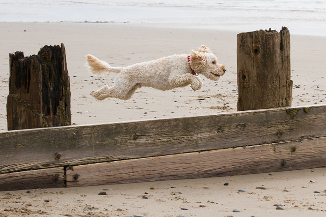 Turbo's beach antics - flying!