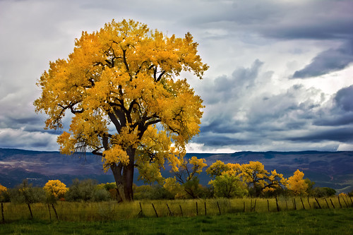 color fall colorado cedaredge davidleeshort