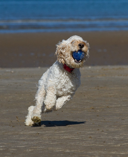 Turbo's beach antics - going for touch!