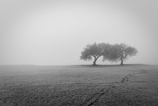 foggy dual trees