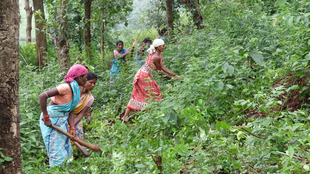 Women farmers of Maligaon in Odisha raising a farm on commons land which will be shared among the community. Pic by Basudev Mahapatra.