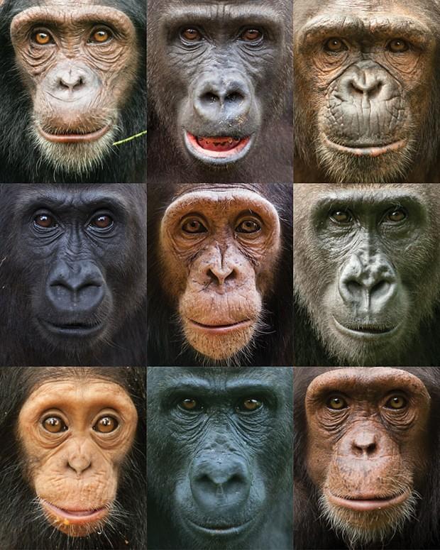 130723  Great Ape WEB.full