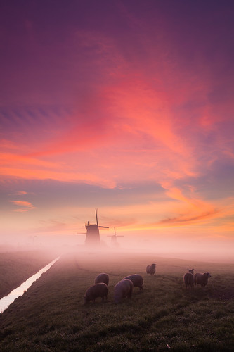 netherlands windmill sheep polder noordholland beemster schermerhorn grondzeiler hitechfilters hitechndgrad09reverse