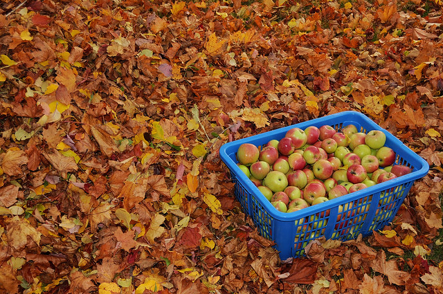 Autumn Harvest ... Nature's Bounty