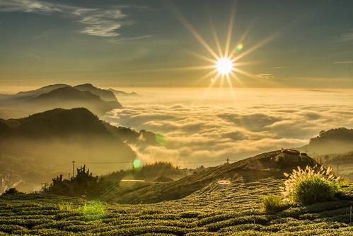 台灣 嘉義阿里山 頂石桌 雲海 日落 陽光 茶園 廟 山 步道 芒花 天空