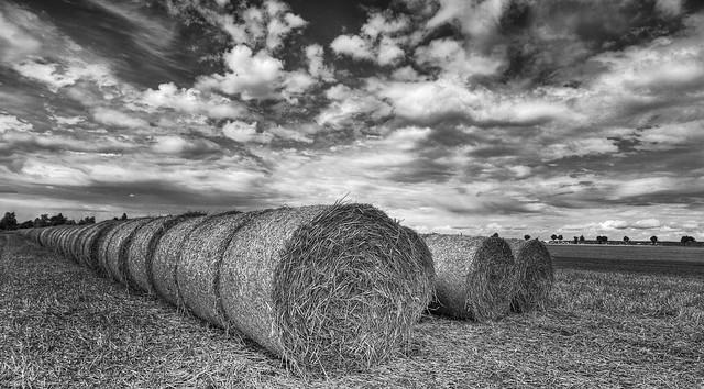 Harvested cornfields near Bonn