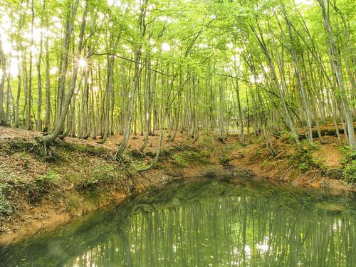 sunset japan forest bamboo niigata 美人林 bijinbayashi