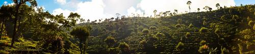 travel panorama green art beautiful landscape photography photo interesting nikon image srilanka asiasociety d5100