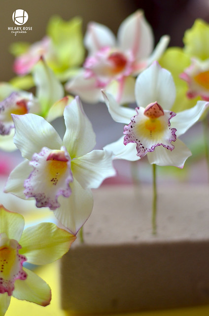 Orchids on my workbench.