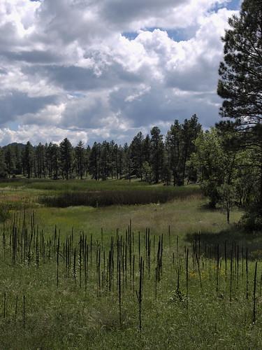 bigspringsenvironmentalstudyarea bigsprings arizona nature pinetop pinetoparizona pinetoplakeside landscape riparian riparianzone riparianarea riparianhabitat