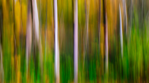 trees abstract motion blur pacificnorthwest streaks canoneos5dmarkiii sigma35mmf14dghsmart washington johnwestrock